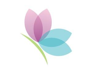 lotus flower butterfly