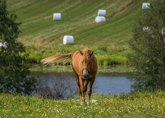 Horse and haybales