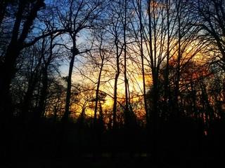 Arbres au crépuscule