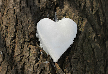 heart from snow on brown tree bark