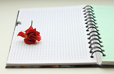 red dry rose in note-book