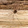 Leinwanddruck Bild - Big Scary Spider