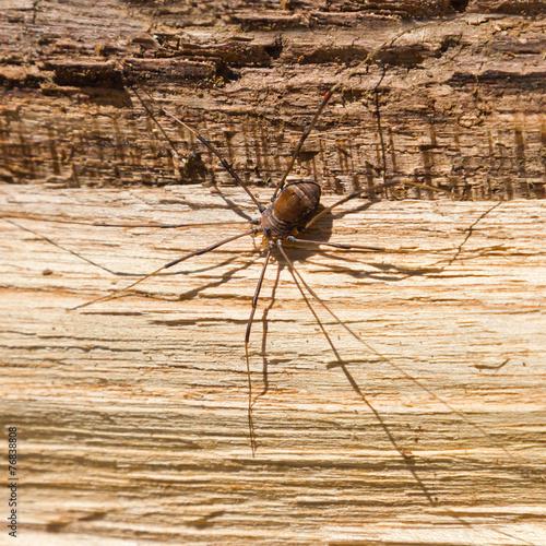 Leinwanddruck Bild Big Scary Spider