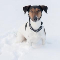 Winter dog portrait