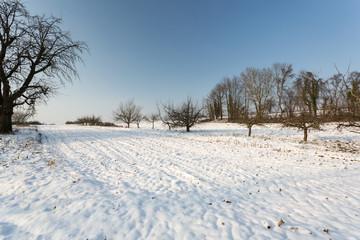 Neige sur la campagne et arbres