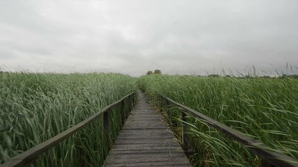 Wooden path trough the reed glidecam footage