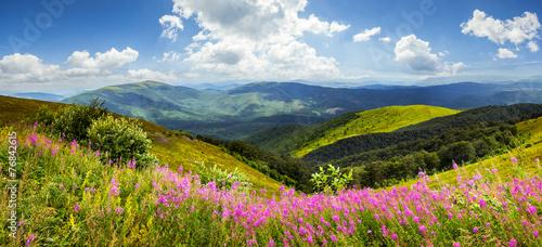 Aluminium Bergen wild flowers on the mountain top