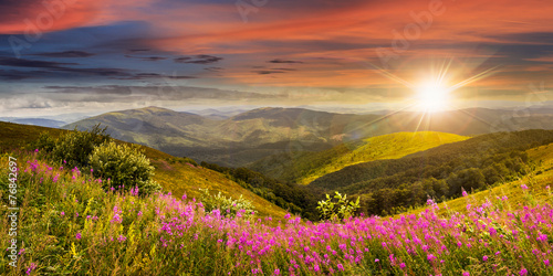 wild flowers on the mountain top at sunset - 76842697