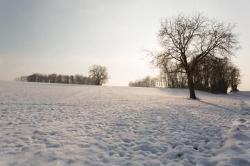 Neige et arbre