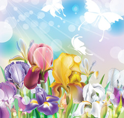 Background with Iris flowers