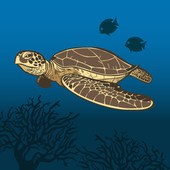 Funny cartoon sea turtle. Vector illustration