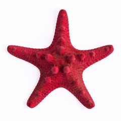 The red starfish on the white background.