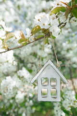 Little wooden house in Spring with blossom cherry flower sakura