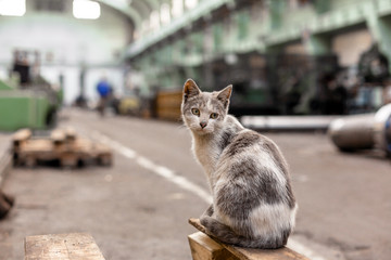 Dirty street cat sitting in factory