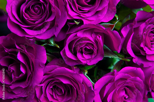 Poster Roses Purple natural roses background