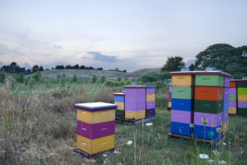 Colored Beehives in a Field