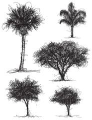 Tree Scribbles