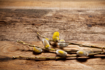 Pussy willow on wooden background