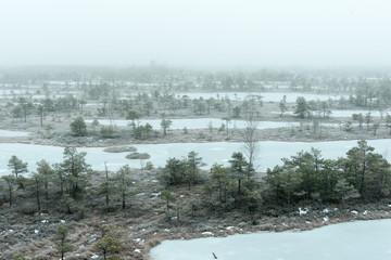 snowy landscape in frosty winter bog