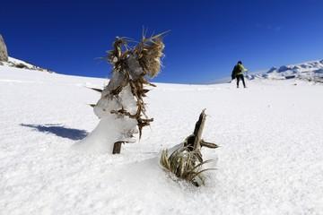 Randonnée sur neige, raquette