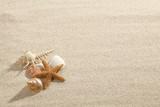 Fototapety Starfish & Shells on Beach Sand
