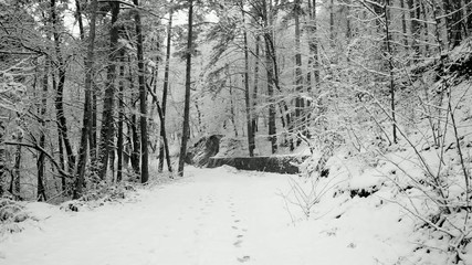 Calm forest landscape during snowfall