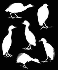 six herons isolated on black background