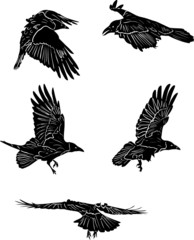 collection of five isolated black crows sketches