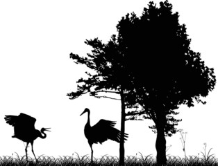 two cranes in black forest illustration