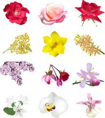 set of twelve isolated flowers on white
