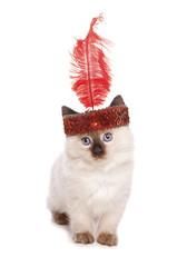 Ragdoll kitten with a flapper girl headband