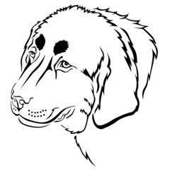 Dog muzzle contour