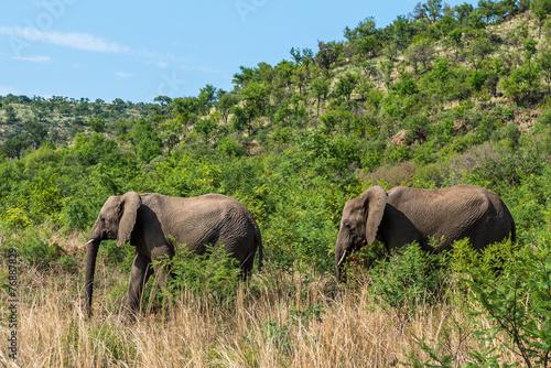 Fotobehang Neushoorn Elephant. Pilanesberg national park. South Africa.