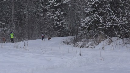 Skijoring in Karelia on stage of the World Cup