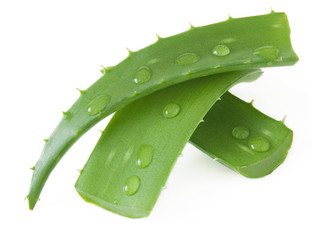 Fresh aloe vera leaves with water drops