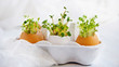 watercress salad and in eggshells - Easter card - 76896859