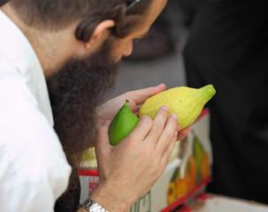 An orthodox Jew  picks citrus before the Sukkot