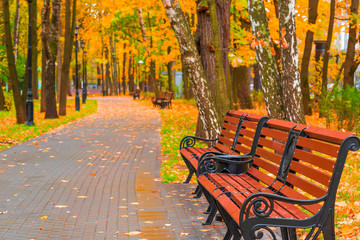 beautiful autumn park with empty benches