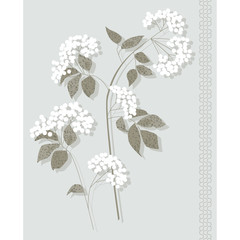white botanical