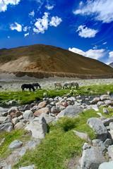 Horses near river in Himalaya