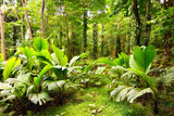 Tropical rain forest in Mahe Island, Seychelles - 76907411