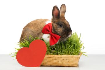 Little bunny is near red paper heart