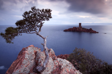 Pine tree and castle island