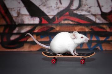 Mouse skating