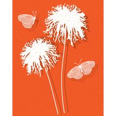 chrysanthemum on orange