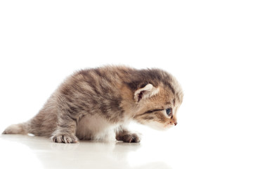 cute kitten looking at a white background
