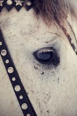 Eye of a horse.