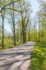 Winding road in spring forest