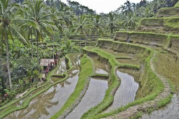 Tegalalang: risaie a terrazza