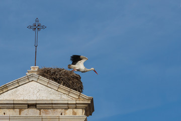 A stork leaving the nest on top of a monument in Faro, Algarve,